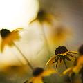 写真: 降り注ぐ太陽