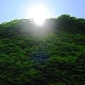 Photos: 蔦茂る正午