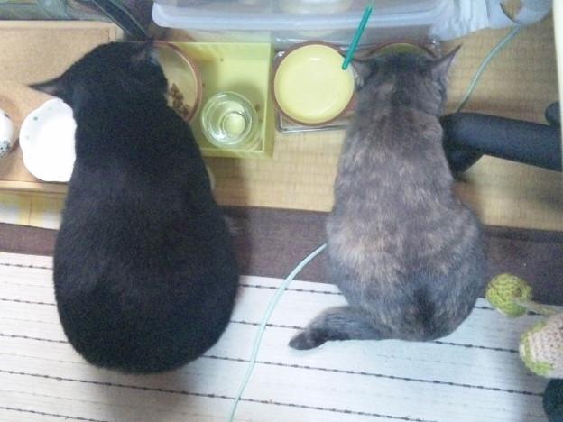 Photos: おはよう。並んでご飯中。今...