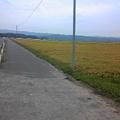 写真: 稲刈りも始まってすっかり秋ですな。涼しくて自転車日和ですた。
