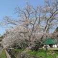 Photos: 大原八幡宮(3)