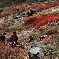 IMG_8857那須 茶臼岳 姥ヶ平の紅葉2