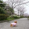 写真: 20100328 001