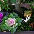 Photos: 松竹梅とハボタンの寄せ植え