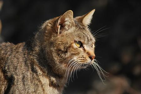童謡の園・猫3