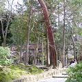 Photos: 水路閣遠景