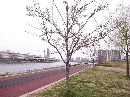 南千住 汐入公園の桜 2010-3-28 35