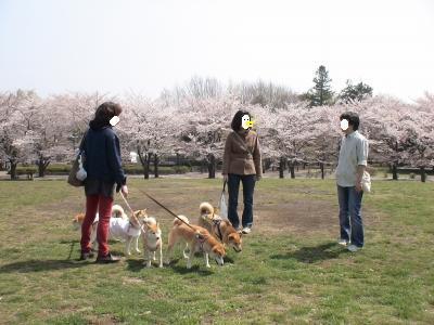 桜も残ってるよ