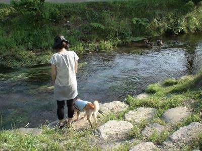清流の小川も
