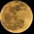 写真: Luna 満月 1/20