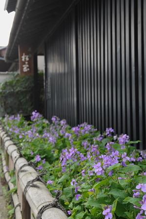 東慶寺 ショカッサイ