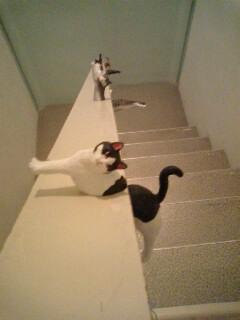 うぁΣ(゜д゜;)階段に何...