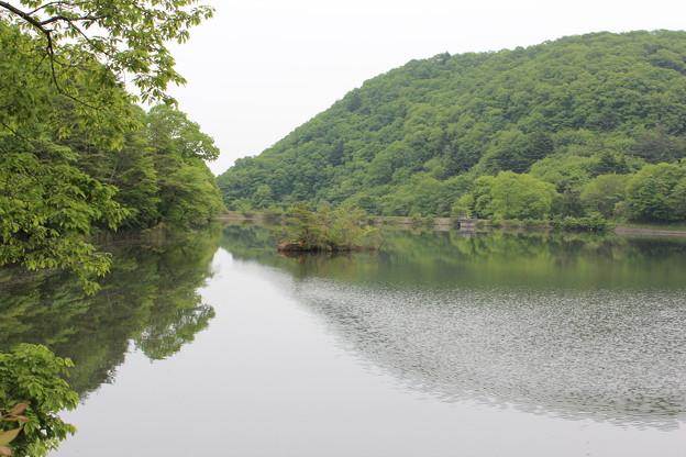 Photos: 24.5.25サイカチ沼