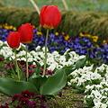 写真: 春を満喫